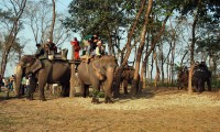 Bardia Jungle Safari Tour