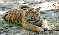 Bardia National Park Jungle Safari Tour